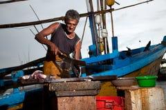 Der Fischmarkt in Sri Lanka Stockfotografie