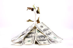 Der Fluch des Geldes Stockfoto