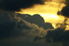 Der Flug des Vogels Lizenzfreies Stockbild