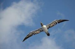 Der Flug eines Vogels stockfotografie