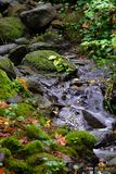 Der Fluss, der über Felsen in das Moos fließt, füllte grünes Fallholz lizenzfreie stockbilder