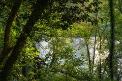 Der Fluss Adda über dem grünen Wald in Nord-Italien lizenzfreie stockfotografie