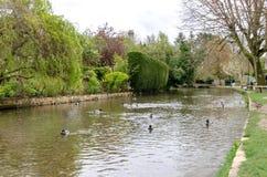 Der Fluss in Bourton auf dem Wasser mit Enten stockfoto
