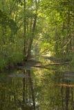 Der Fluss fließt den grünen Wald durch stockfotografie