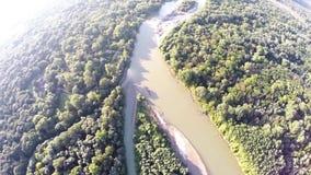 Der Fluss fließt in den Wald stock video