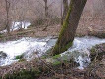 Der Fluss Grza in Serbien Lizenzfreies Stockfoto