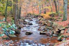 Der Fluss Ilse im Nationalpark Harz Lizenzfreie Stockbilder