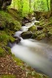 Der Fluss im Früjahr. Lizenzfreies Stockbild