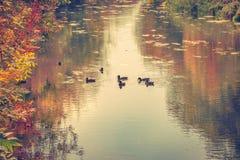 Der Fluss im Herbst Stockfotografie