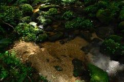 Der Fluss im Wald Stockfotos