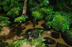 Der Fluss im Wald Lizenzfreie Stockfotos