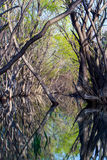 Der Fluss im Wald Stockbilder