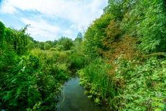 Der Fluss-Kran in West-London lizenzfreies stockfoto
