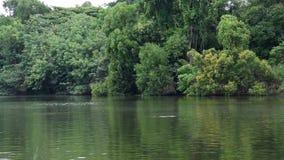 Der Fluss, der leicht durch Waldansicht von fließt, erlauben die großen grünen Bäume, die im tropischen bei Thailand wachsen stock video footage