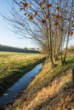 Der Fluss nahe den Bäumen Lizenzfreies Stockbild