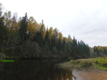 Der Fluss Oredezh Stockfotografie
