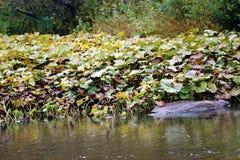 Der Fluss wurde mit Meerespflanze überwältigt stockfoto