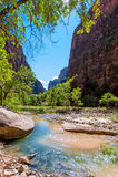 Der Fluss in zion Park stockfotografie