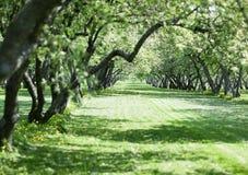Der Frühlingsgarten Lizenzfreie Stockfotos