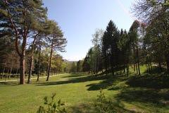 Der Frühlingspark von Bäumen lizenzfreie stockfotos