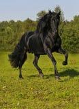 Der freie schwarze Pferdenläufergalopp auf dem Feld stockfotos