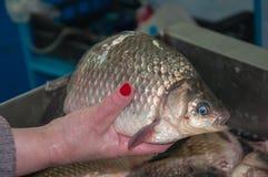 Der frische crucian Fisch wird am Basar verkauft Stockbild
