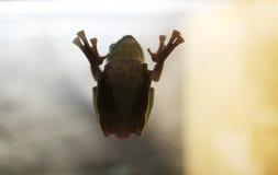 Der Frosch Lizenzfreies Stockfoto