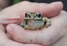 Der Frosch in den Händen Lizenzfreie Stockfotos