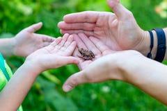 Der Frosch sitzt auf seinen Händen Scherzt Entdeckung lizenzfreies stockbild