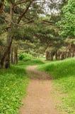 Der Fußweg im Wald Lizenzfreies Stockfoto