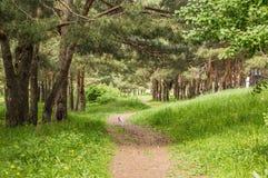 Der Fußweg im Wald mit dem Hund Lizenzfreie Stockbilder