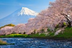 Der Fujisan und Kirschblüte Stockfotografie