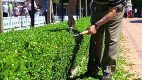 Der Gärtner trimmt die Büsche stock video