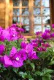 Der Garten Lizenzfreies Stockfoto