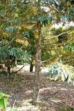 Der Garten stockfoto