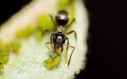 Der Garten der Ameise lizenzfreies stockbild