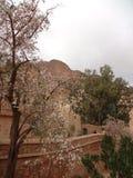 Der Garten des Klosters des Heiligen Catherine Stockfoto
