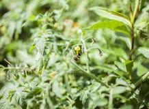 Der Garten - eine Nahaufnahme einer Biene Lizenzfreies Stockfoto