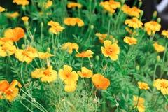Der Garten ist von den Blumen voll Bewirken Sie seitlichen 50mm Nikkor Stockfotografie