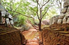 Der Garten nahe Sigiriya (Felsen des Löwes) Stockbild