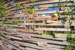 Der Garten von viel Lizenzfreie Stockfotos