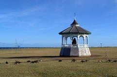 Der Gazebo, der auf Martha-` s Vinyard, Ozean-Park gelegen ist, Eiche täuscht Stockfotos