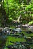 Der Gebirgsfluss. Stockbild