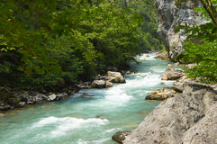 Der Gebirgsfluss, der unter den Felsen in Sommer fließt Lizenzfreie Stockfotografie