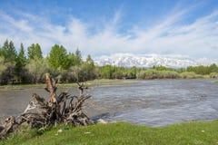 Der Gebirgsfluss, gegen die waldigen Berge, entstehend Stockbilder