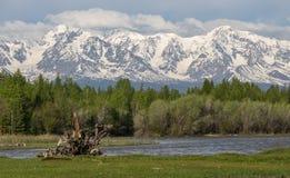 Der Gebirgsfluss, gegen die waldigen Berge, entstehend für Lizenzfreie Stockbilder