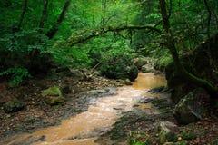 Der Gebirgsfluss im Wald nahe dem Nord-Kaukasus Lizenzfreie Stockfotografie