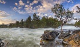 Der Gebirgsfluss in Norwegen mit Wald lizenzfreie stockbilder