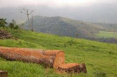 Der gefallene Baum Stockbilder