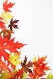 Der gefallene Herbst färbte Blätter Stockbilder